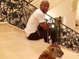 Mayweather tiger